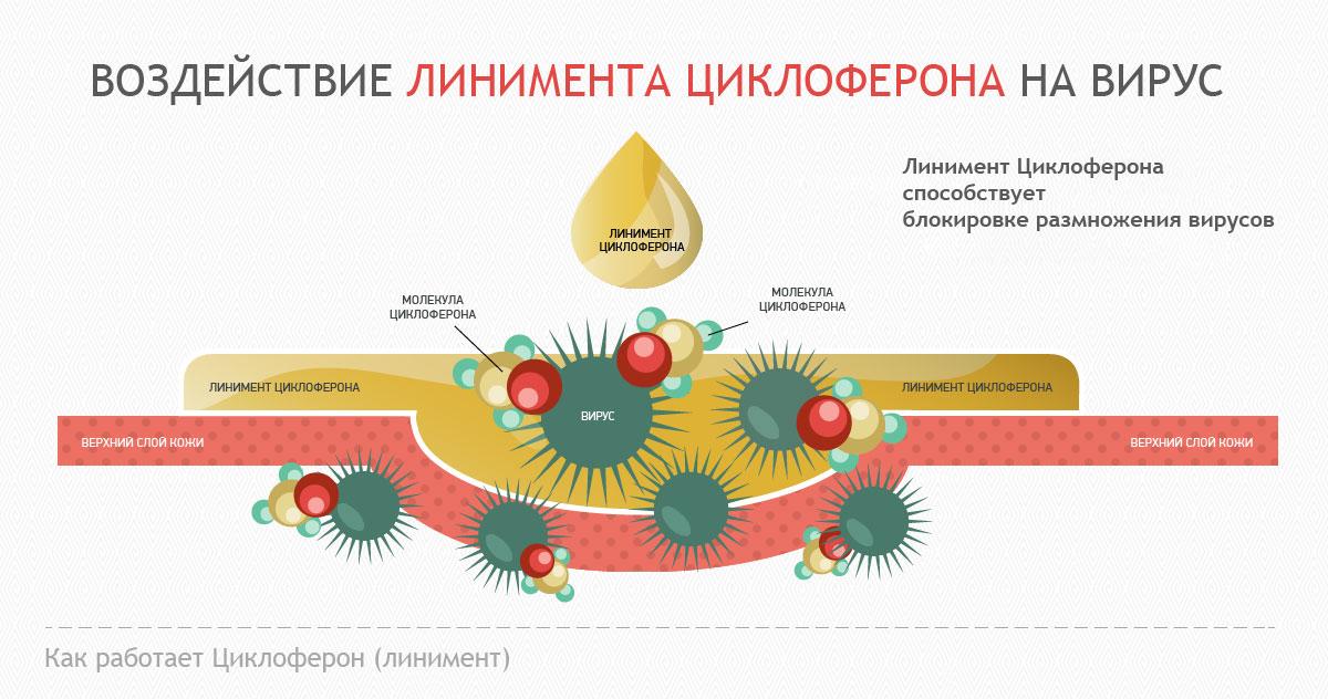 Механизм действия Циклоферона